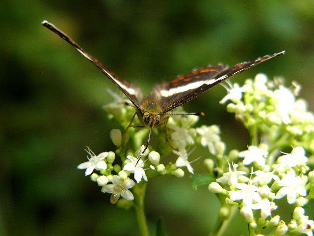 蝶 ~山の中で~_e0063851_1815104.jpg