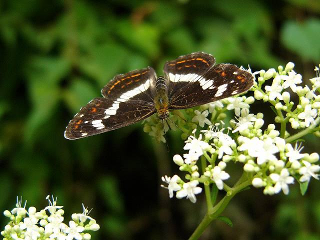 蝶 ~山の中で~_e0063851_18153383.jpg