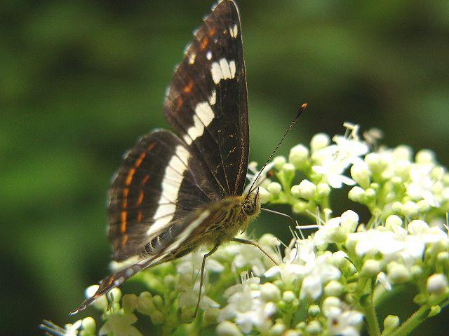 蝶 ~山の中で~_e0063851_181608.jpg