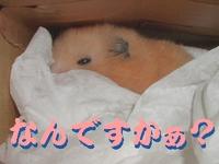 b0016983_1044978.jpg