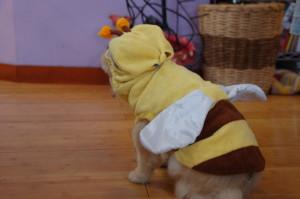 働き蜂になりました。_a0037910_5532485.jpg