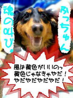 b0048649_18352326.jpg