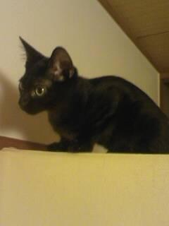 【4cats】 その視線の先には…_a0066779_1851698.jpg
