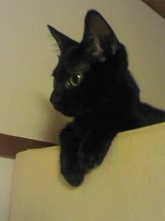【4cats】 その視線の先には…_a0066779_1862510.jpg