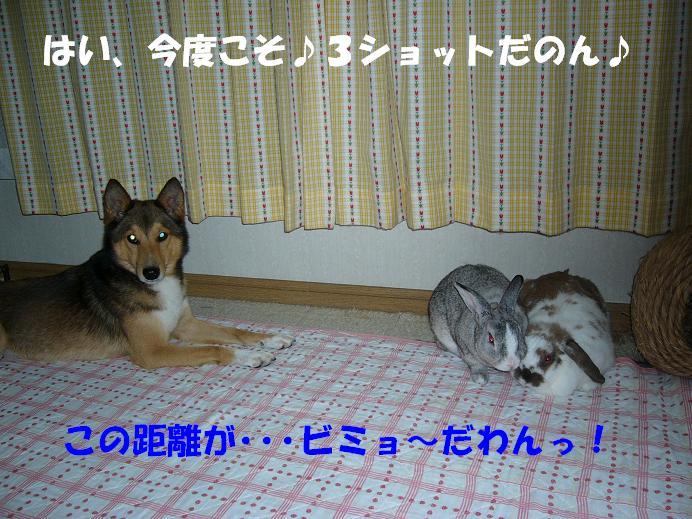 d0032004_20235667.jpg