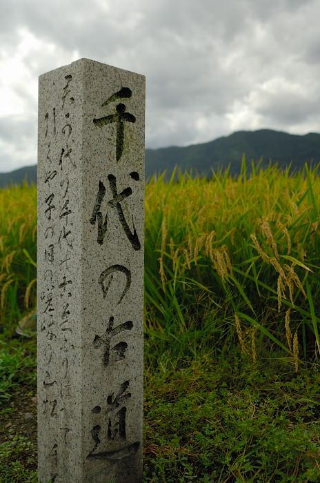 嵯峨野の曼珠沙華_f0032011_2132975.jpg