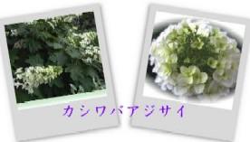 b0086427_1325438.jpg