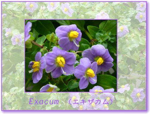f0092775_9115759.jpg