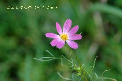b0012811_10484334.jpg