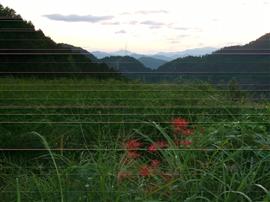 稲の刈り取り時期_e0002820_11562787.jpg