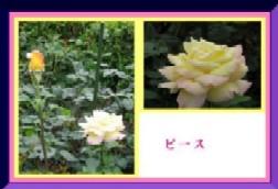 b0086427_23105981.jpg