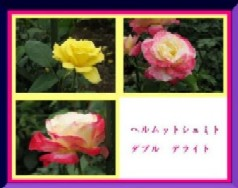 b0086427_23142460.jpg