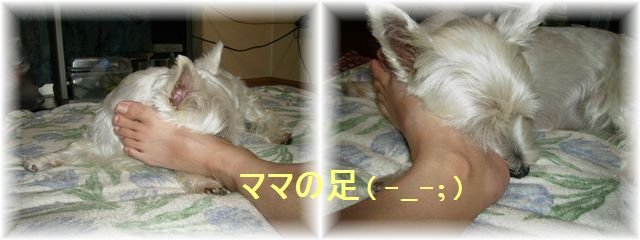 d0080336_19113892.jpg