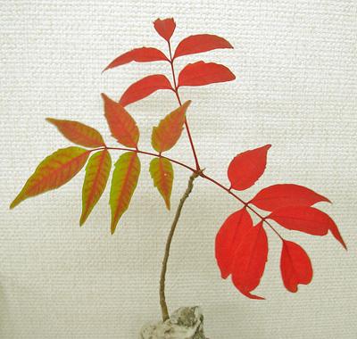 9月19日 紅葉開始_a0001354_2111224.jpg