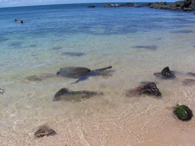 in Hawaii_a0088007_0252187.jpg