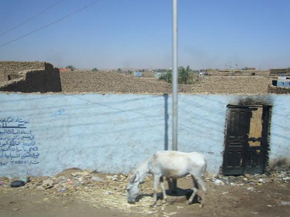酷暑エジプト旅行記(11)   エドフ・コムオンボ・アスワン_b0025511_1046929.jpg