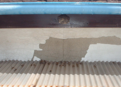 蜂の巣駆除_f0031037_17254519.jpg