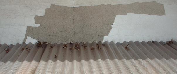 蜂の巣駆除_f0031037_1725561.jpg