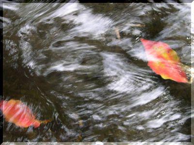 秋の風_b0025947_1656991.jpg