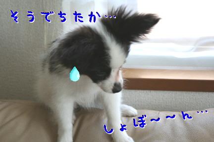 d0013149_1371484.jpg