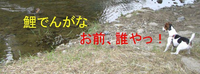 f0053952_12314118.jpg