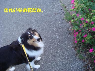 f0046854_2035422.jpg