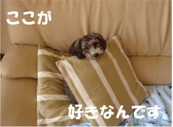 c0065885_16123251.jpg