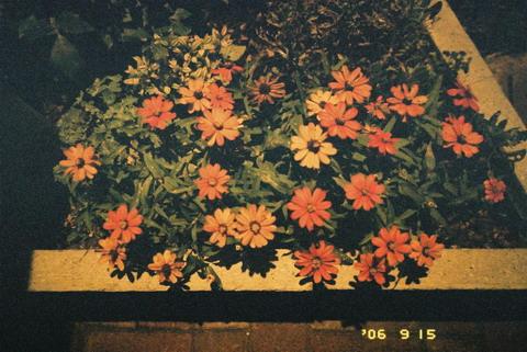 夜中の花 テスト撮影 NATURA CLASSICA +NATURA1600_f0033205_23171851.jpg