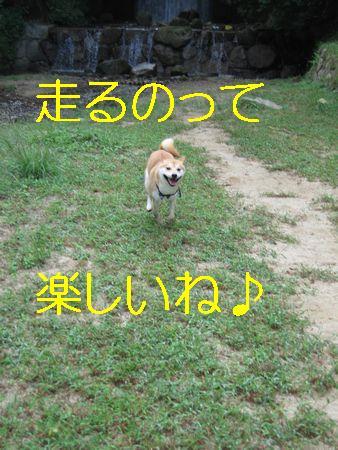 e0085147_23341159.jpg