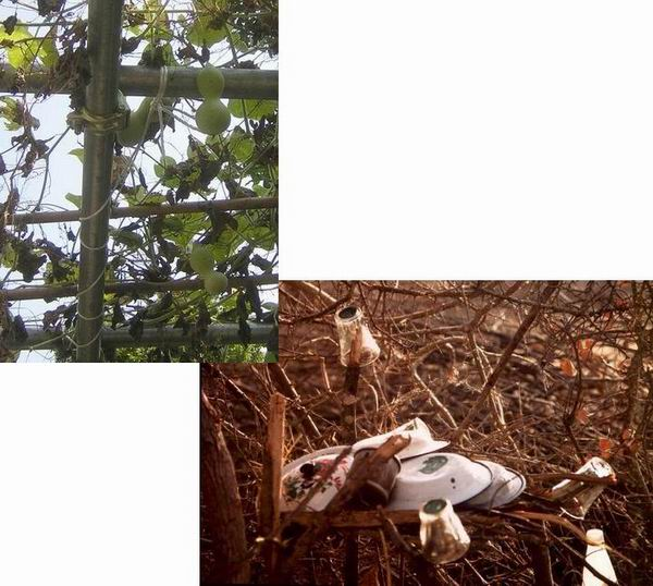 谷中霊園のひょうたん棚と難民キャンプの枯れ枝の食器棚_f0045090_1851476.jpg