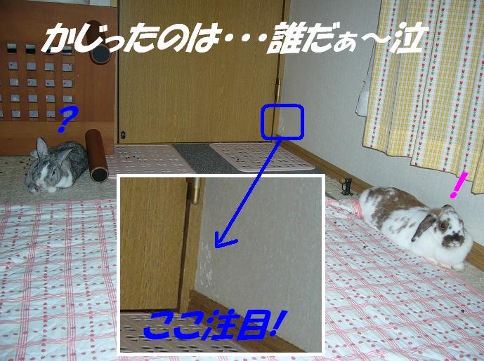 d0032004_232478.jpg
