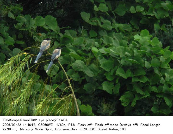 2006.9.22(3) 東京港野鳥公園_c0062451_2033124.jpg