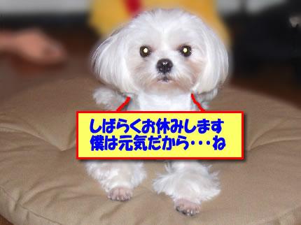 b0060071_228738.jpg