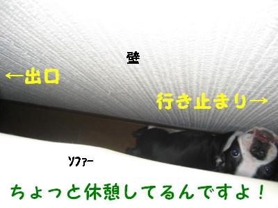 c0092787_12434874.jpg