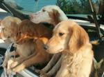 緊急記事掲載!犬たちを救え!!_d0092605_10231847.jpg