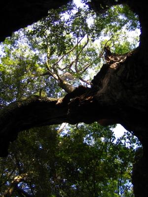 三樹まいり~三樹物語~_d0047811_22244546.jpg