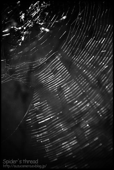 Spider_f0100215_11185243.jpg