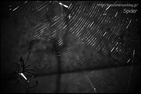 Spider_f0100215_11202560.jpg