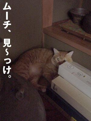 b0080632_5611.jpg