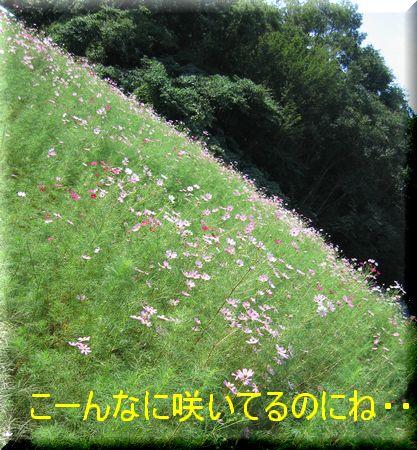 e0085147_045322.jpg