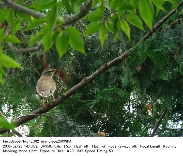 2006.9.23(3) 秋ヶ瀬公園・子供の森_c0062451_2222291.jpg