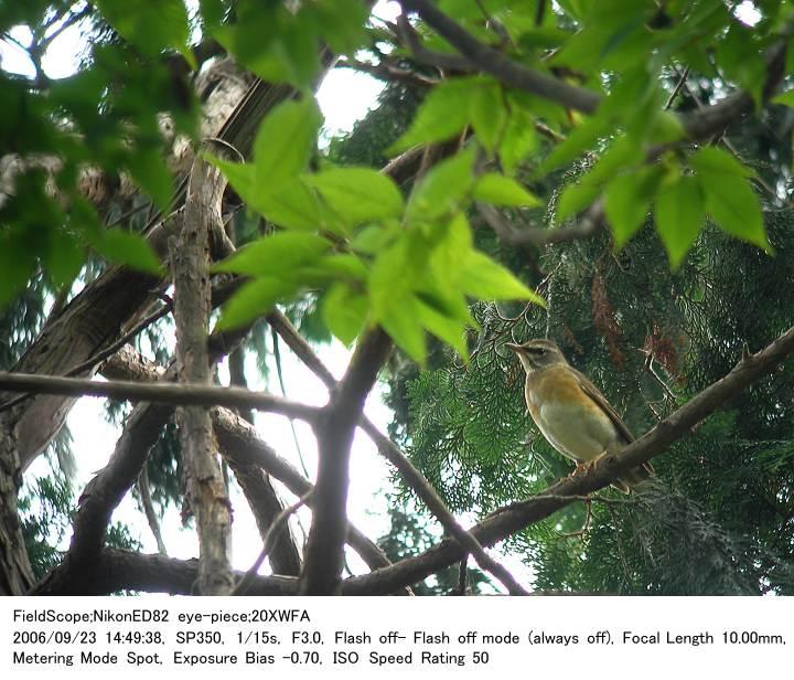 2006.9.23(3) 秋ヶ瀬公園・子供の森_c0062451_2234837.jpg