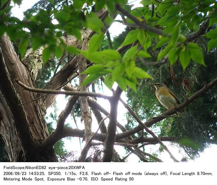2006.9.23(3) 秋ヶ瀬公園・子供の森_c0062451_224368.jpg