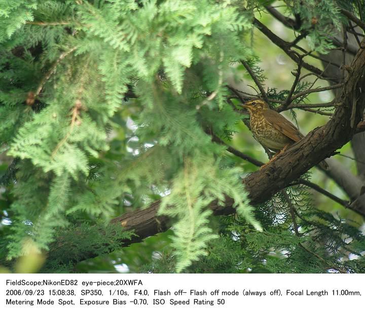 2006.9.23(3) 秋ヶ瀬公園・子供の森_c0062451_225218.jpg