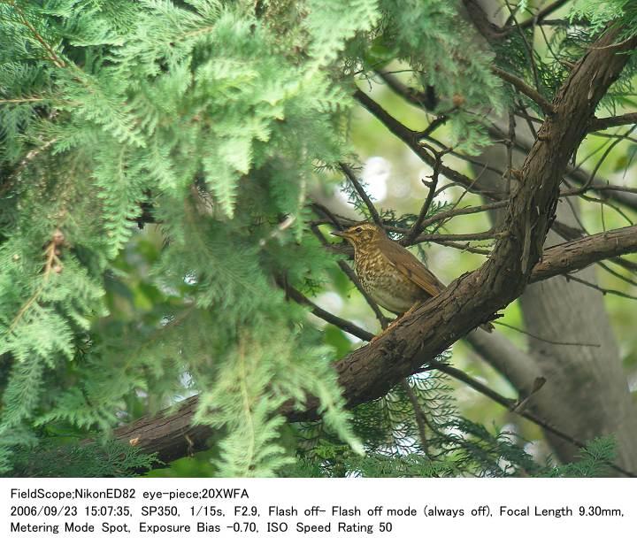2006.9.23(3) 秋ヶ瀬公園・子供の森_c0062451_225759.jpg