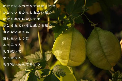 a0002073_2205229.jpg