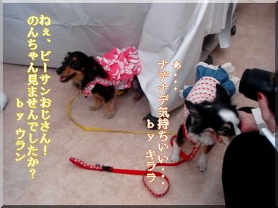 b0078073_0101338.jpg
