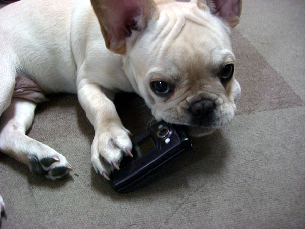 怪獣ベンきょうは携帯食った\(●o○;)ノ_c0068515_174650.jpg