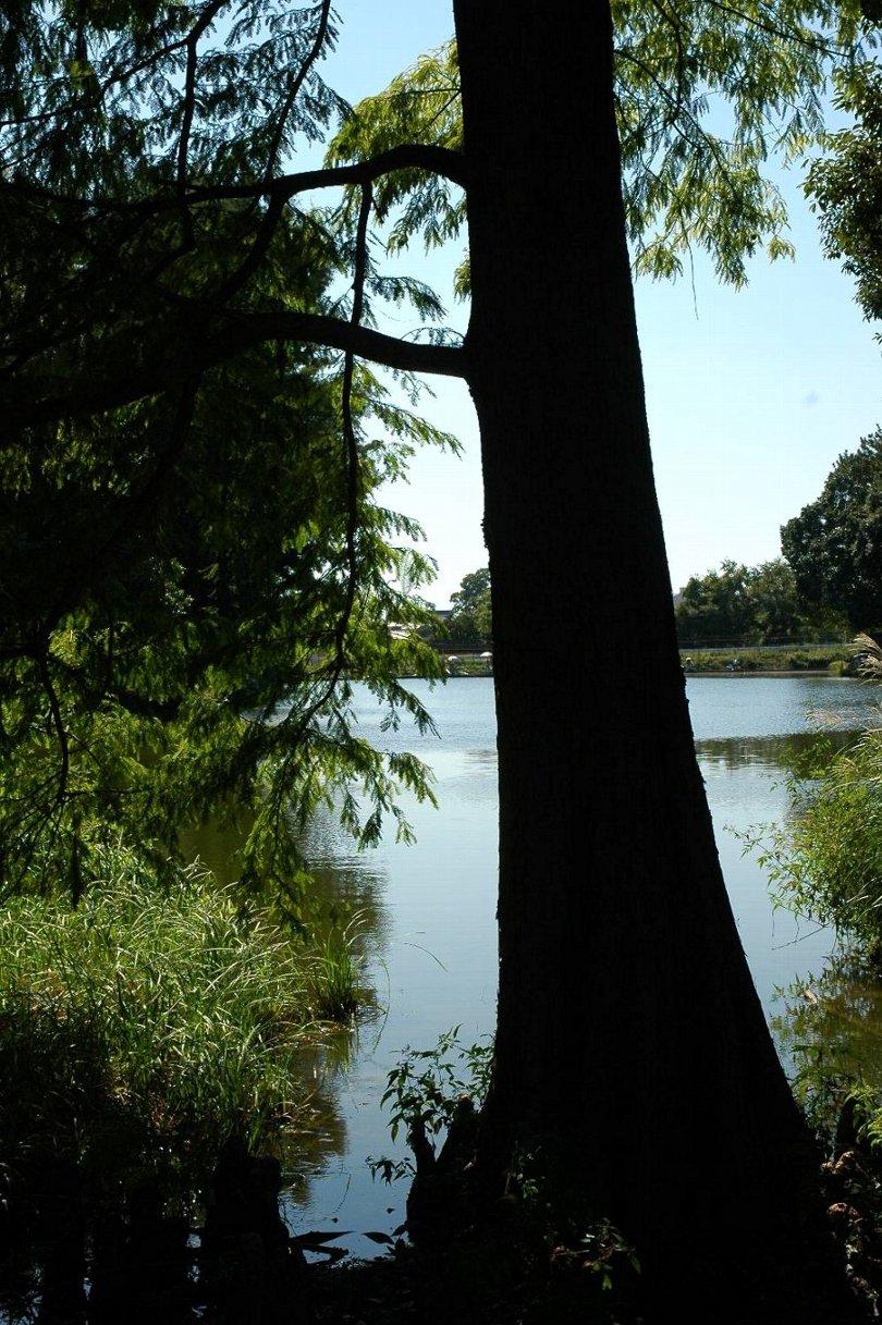 コムギと緑地公園_b0069128_9335683.jpg