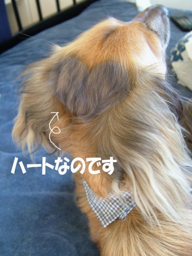 b0070747_1895367.jpg
